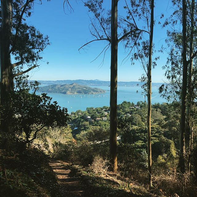 Sailboats in the Bay from a hiking trail in Sausalito. Happy weekend! 🌞
