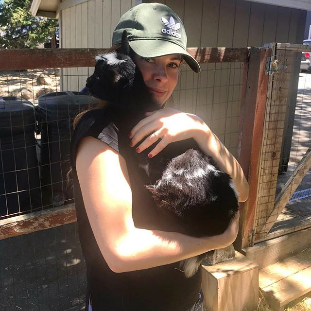 I made a new friend this weekend at @goatlandia_sanctuary in Santa Rosa - this 3 legged dwarf goat was so sweet, and I had a ball playing with her and her friends, including about 20 goats and a handful of gorgeous piggies. Highly recommend this if you're in Sonoma. 🐐🐖