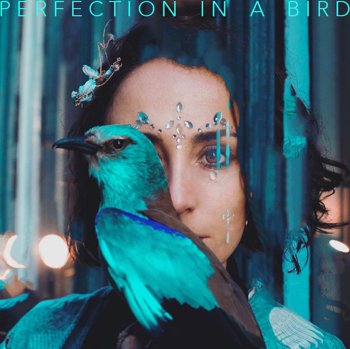 Perfection in a Bird Cover.jpg