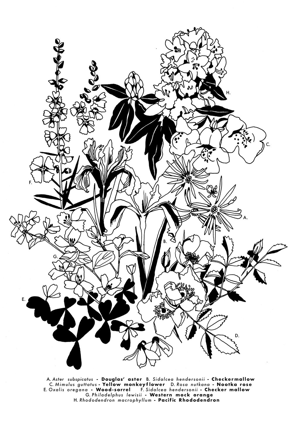 oregon botanical print black layer.jpg