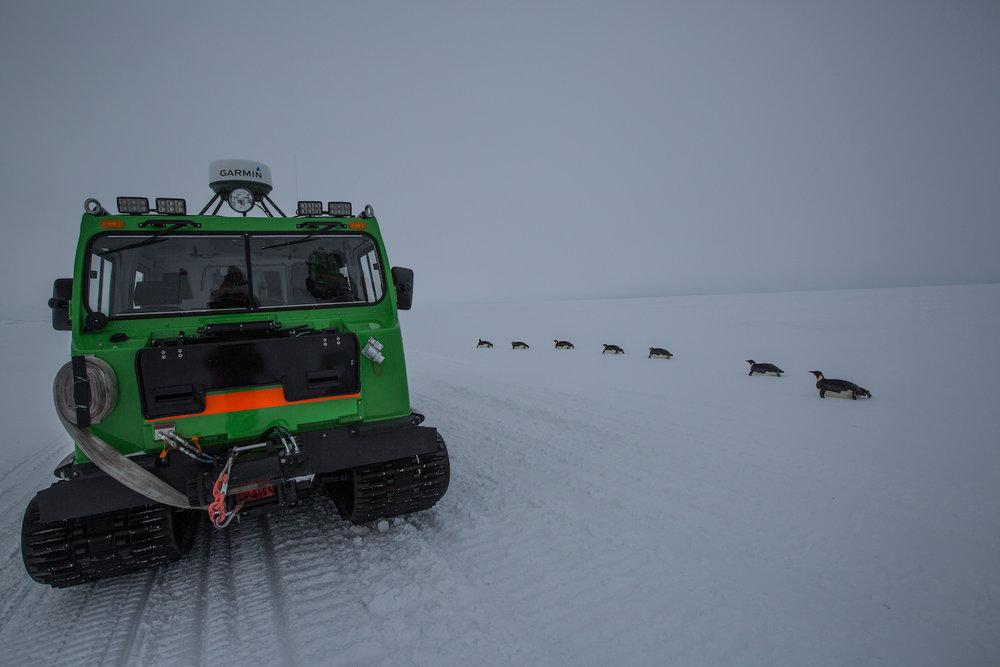 Penguins commute past Hagglund