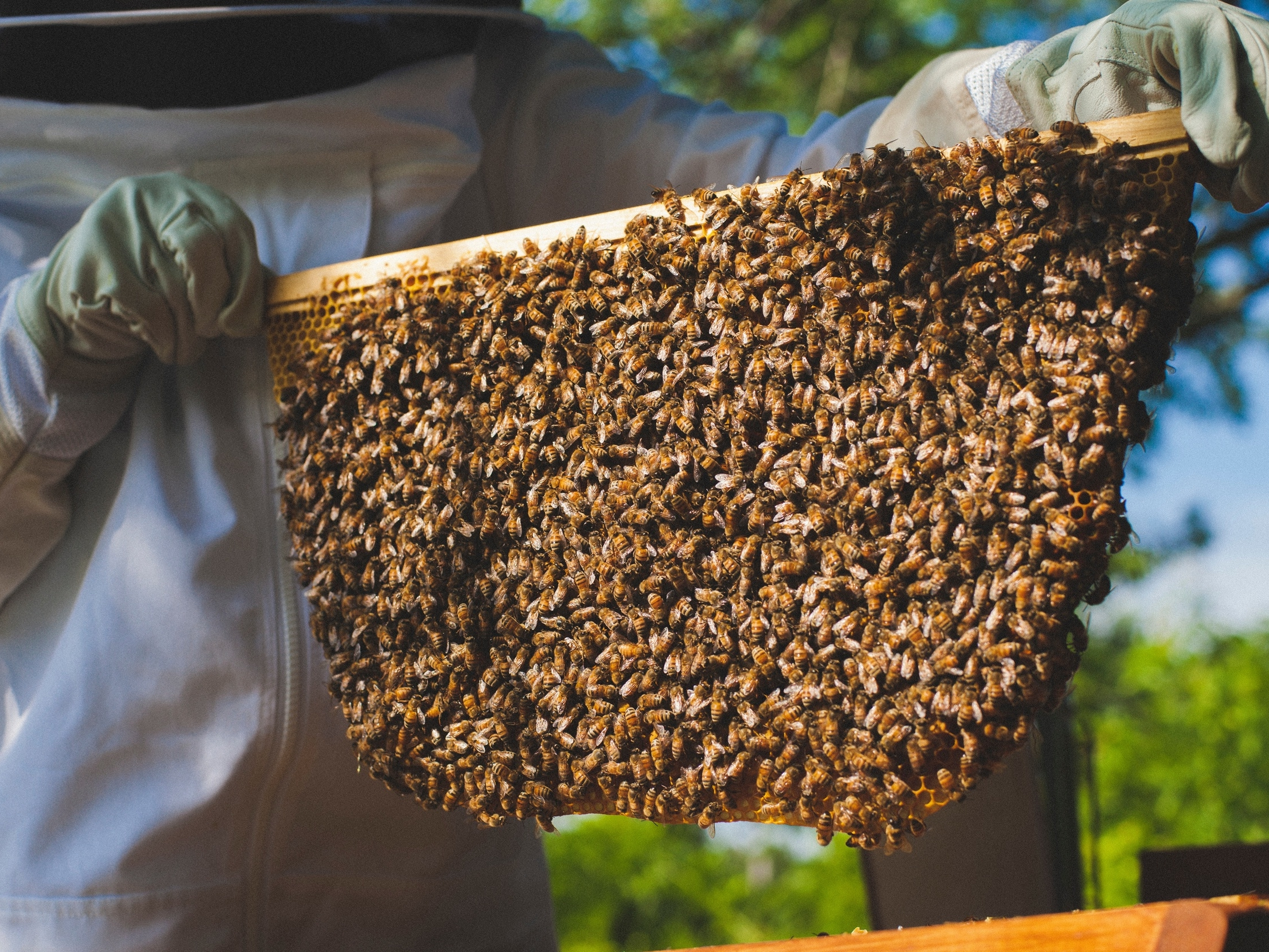 Beekeeping: What It's All About - by Bee & Bloom