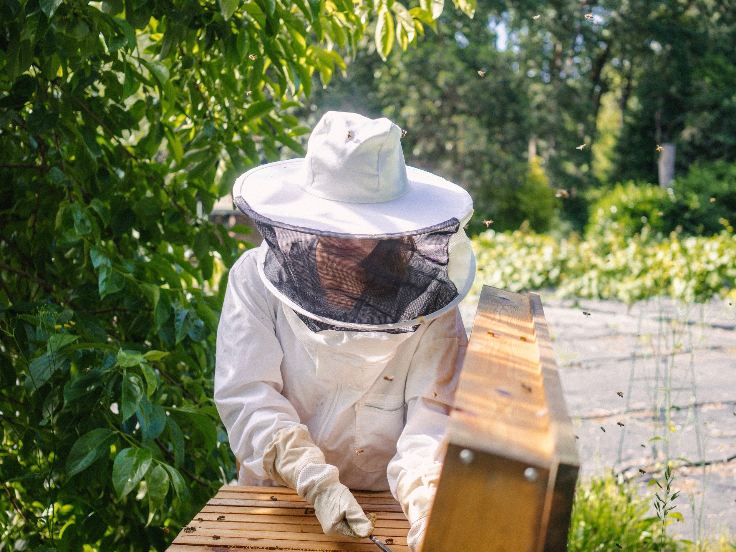 To Bee or Not to Bee: Is Beekeeping Right for You? - by Bee & Bloom