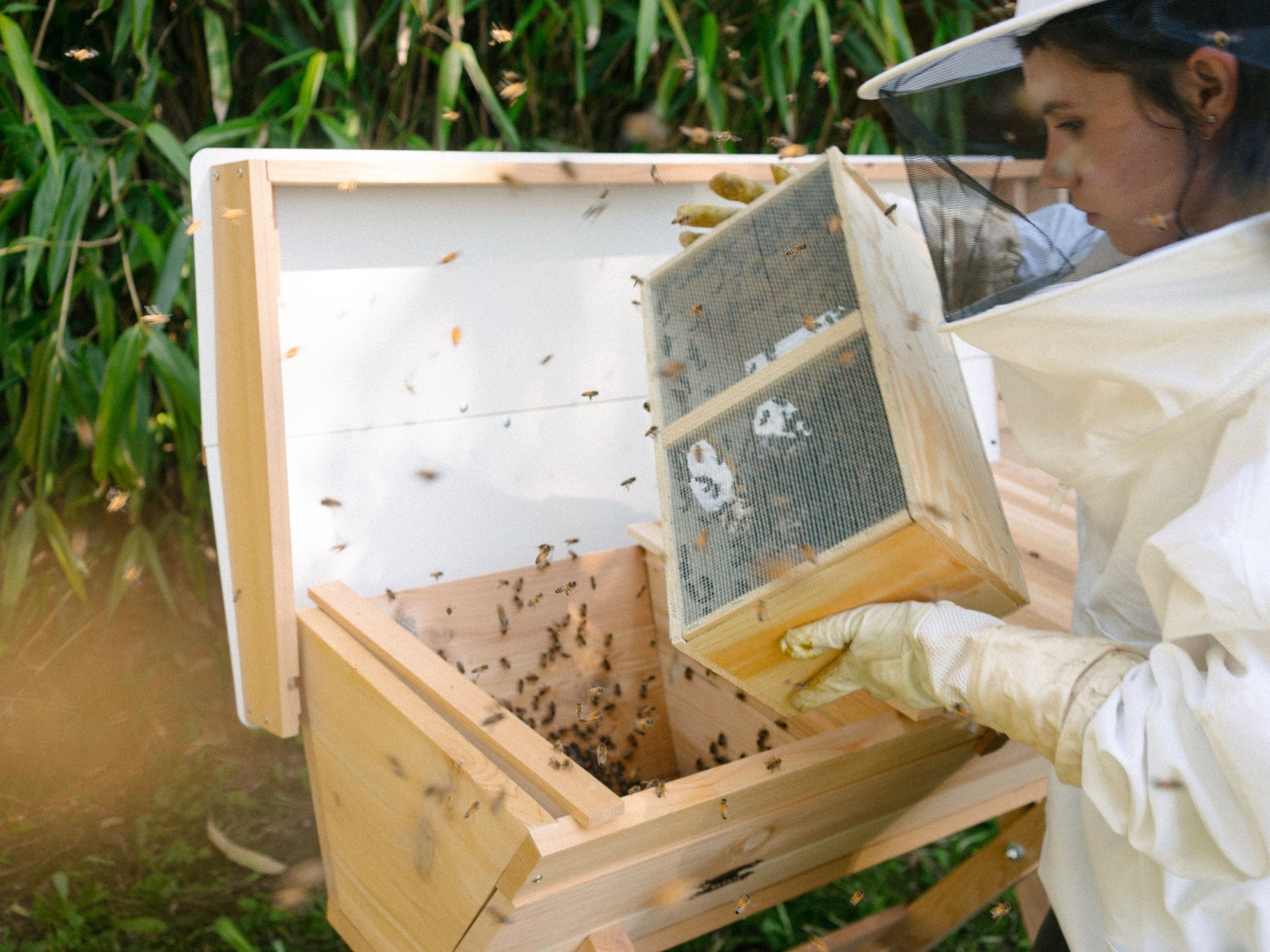 10,000 New Neighbors: How to Populate Your Beehive - by Bee & Bloom
