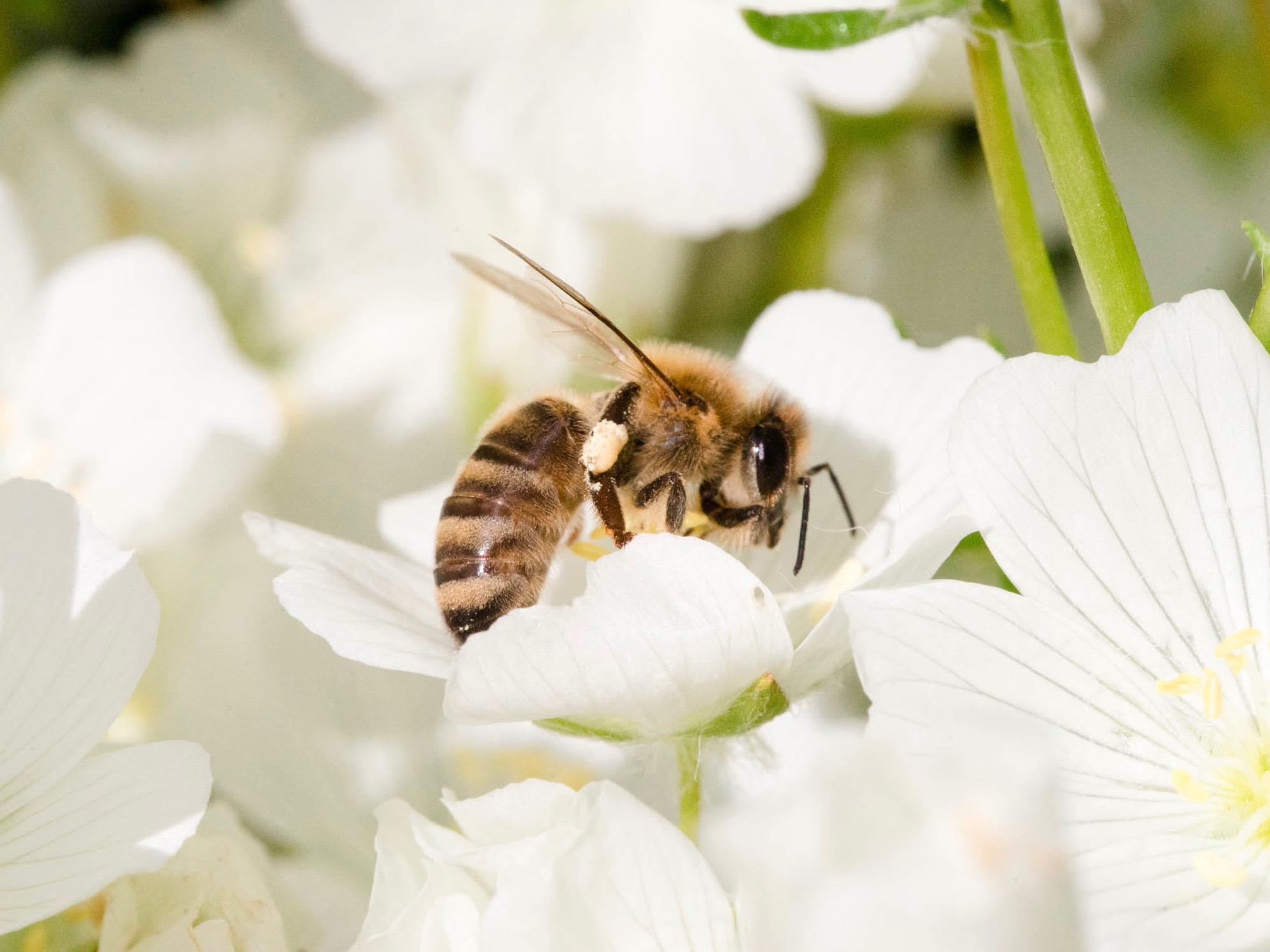 Crafting Your Beekeeping Philosophy - by Bee & Bloom