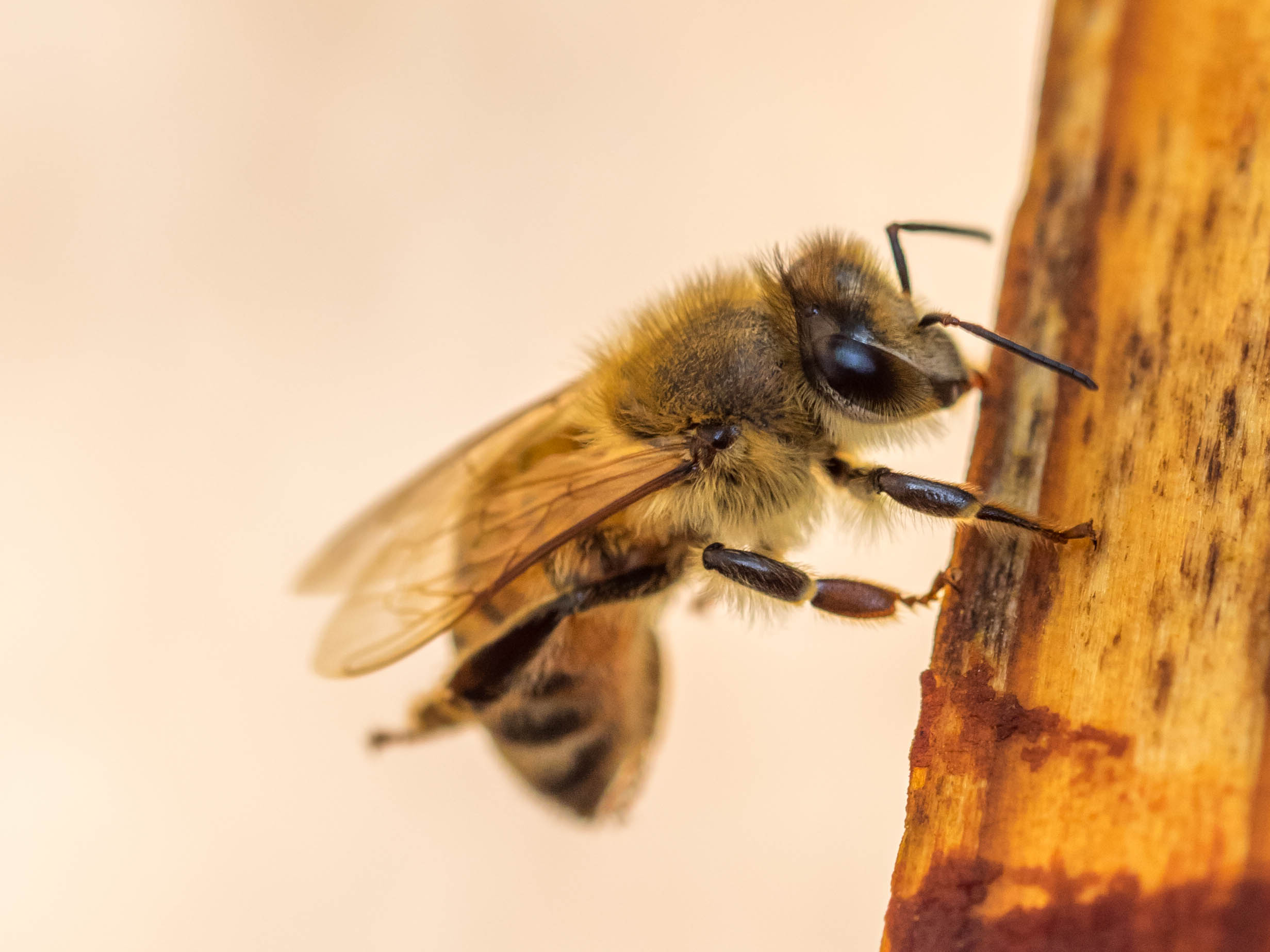 Winter is Coming: How to Winterize your Hives - by Bee & Bloom
