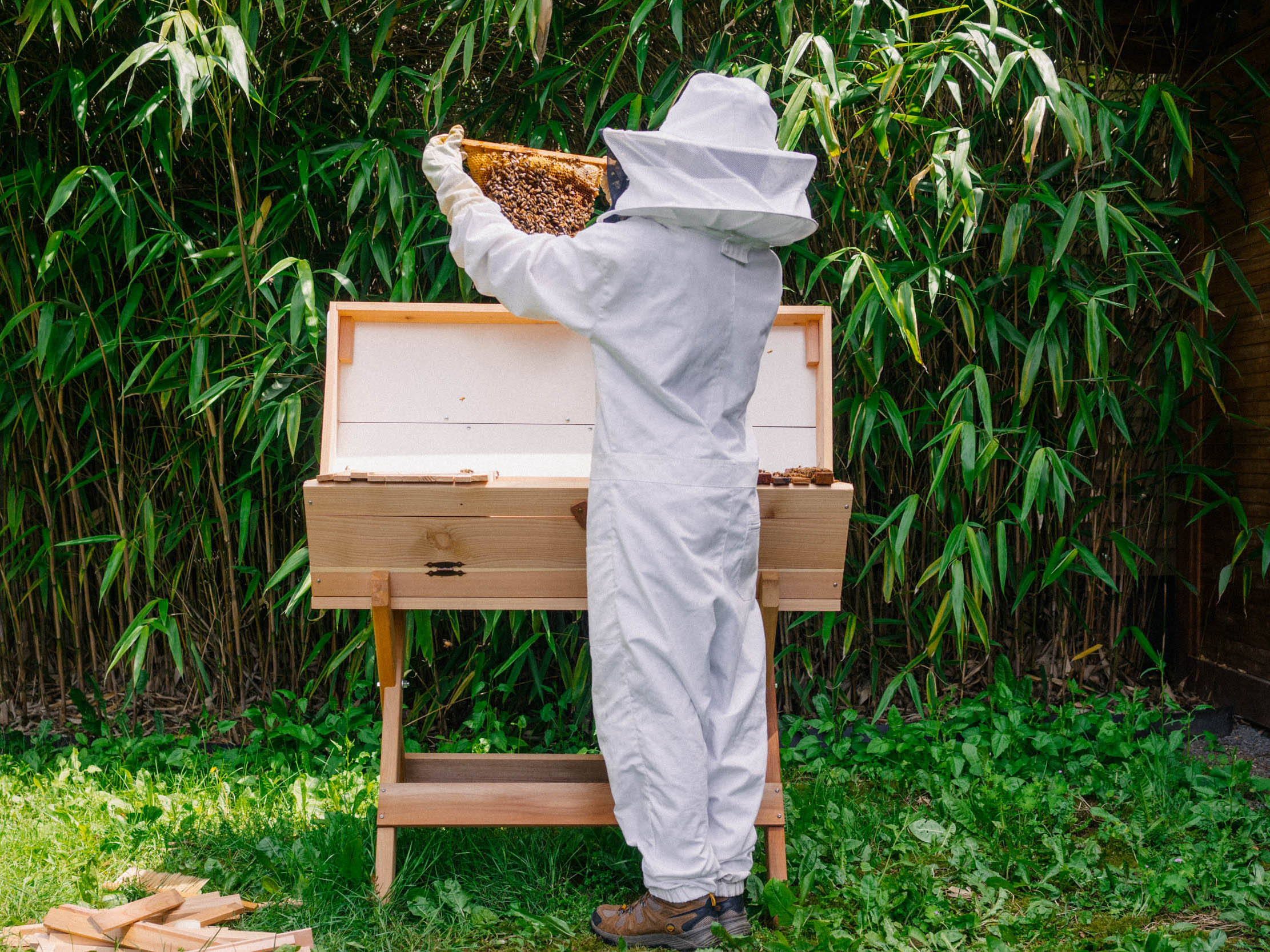 FABQs: Can I REALLY Keep Bees in My Backyard? - by Bee & Bloom