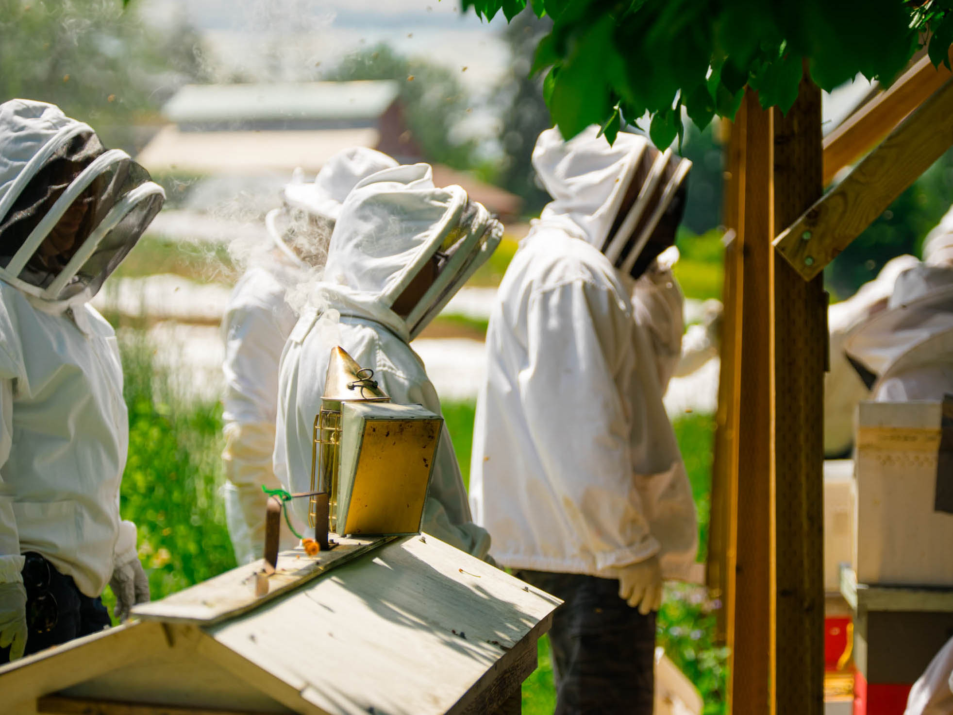 FABQs: Is Beekeeping Legal in My Area? - by Bee & Bloom