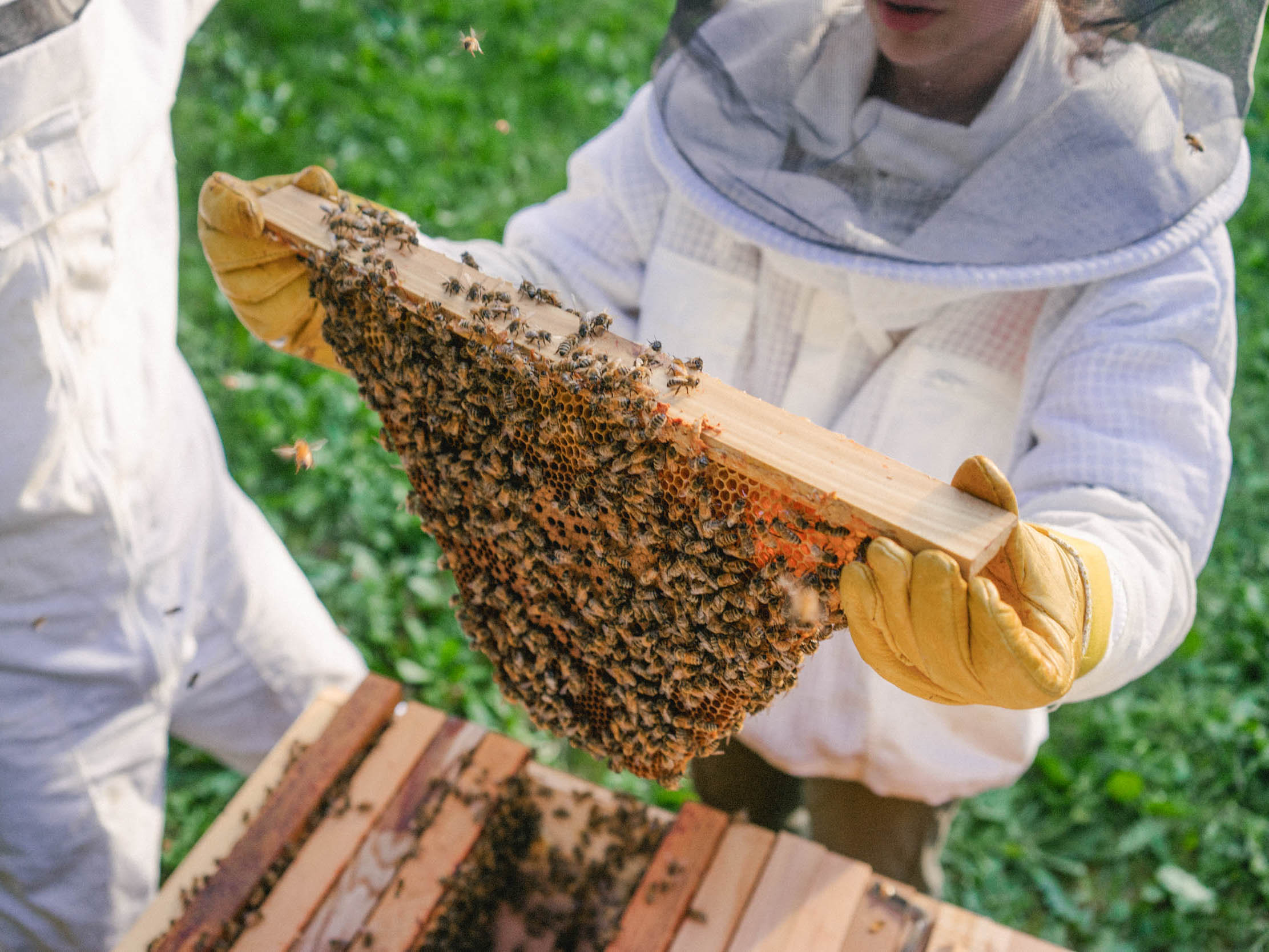FABQs: How Much Work Is Beekeeping? - by Bee & Bloom