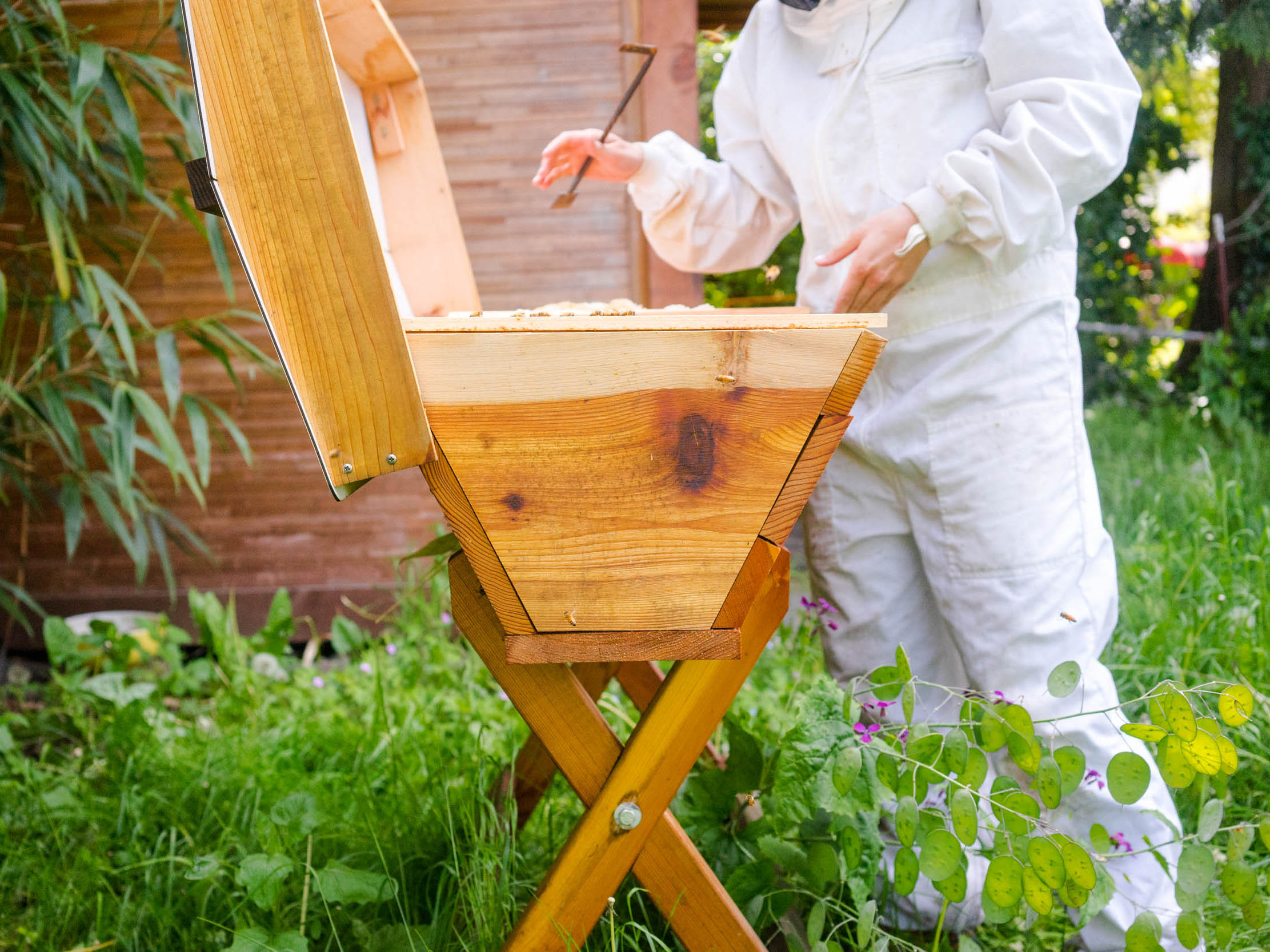FABQs: Where Should I Place My Hives? - by Bee & Bloom