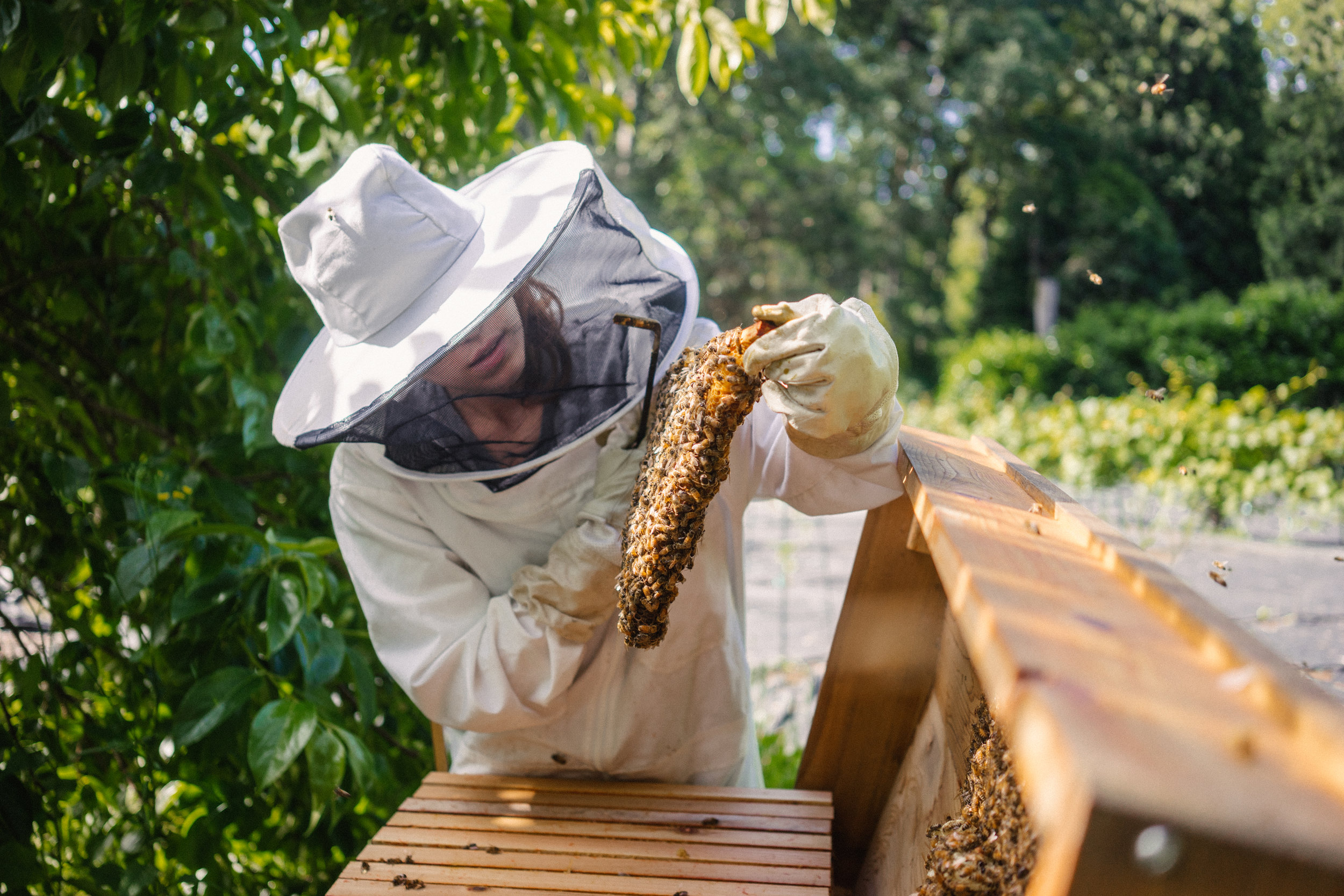 Beekeeping Mentorship - by Bee & Bloom