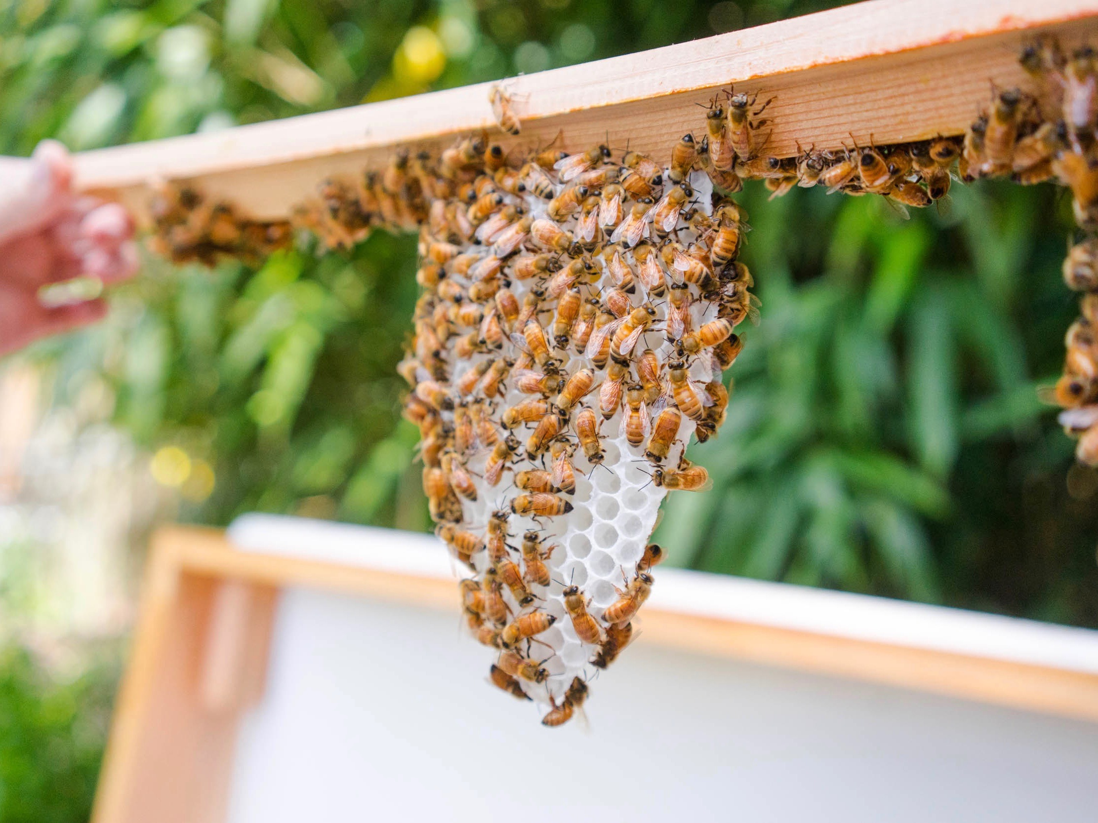 New Bees: Installing & Supporting Newly Established Colonies - by Bee & Bloom