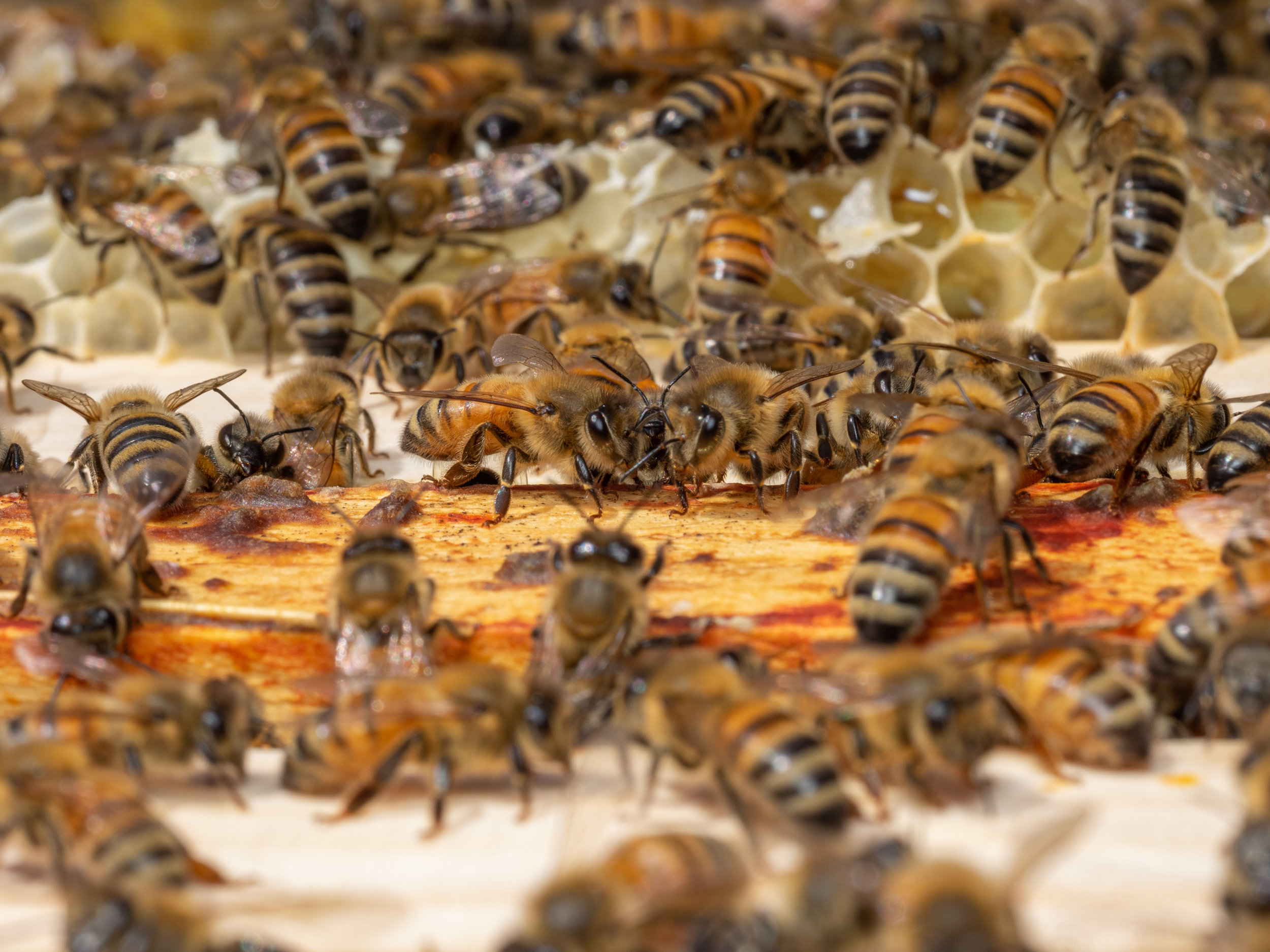 Integrated Pest Management: A Strategy for Better Beekeeping - by Bee & Bloom
