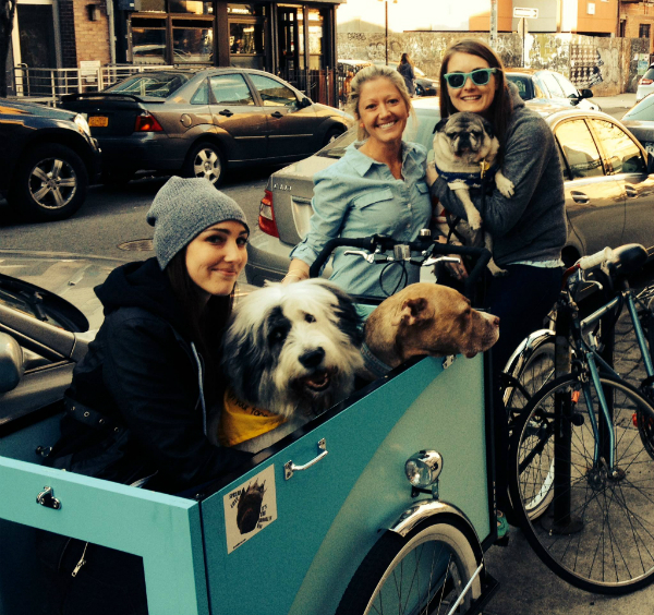 A cargo trike for dogs