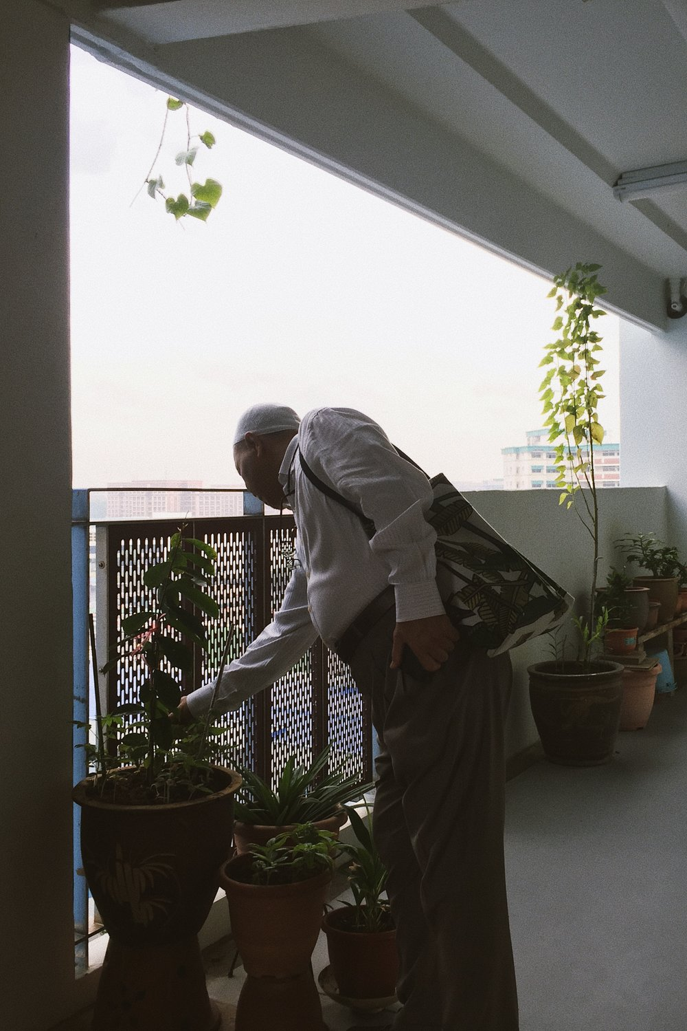 Dad leaving for work and looking at the beauts that are his potted plant. #agfavista800