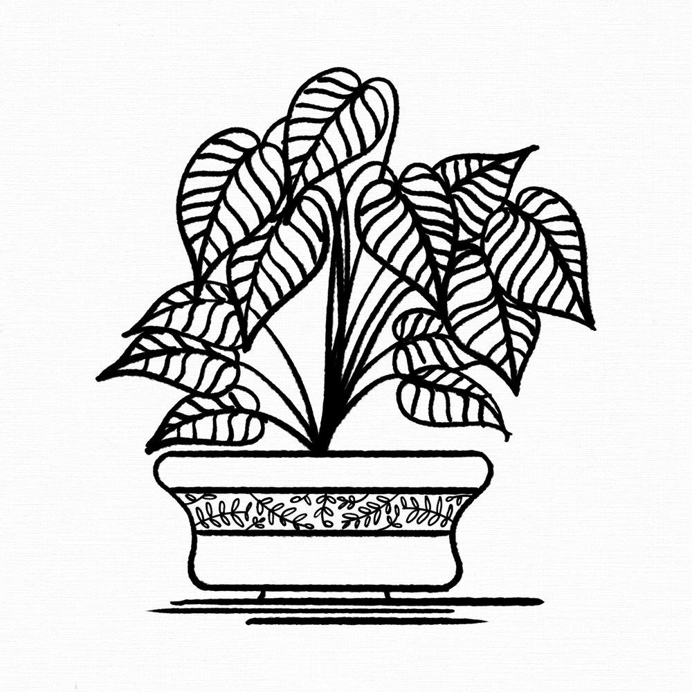 Arrowhead Vine