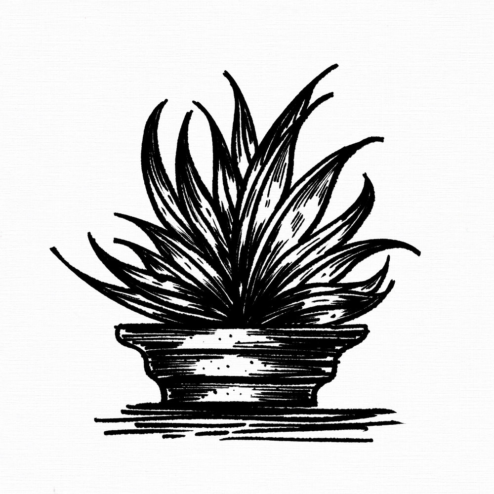 Illustrating a potted Aloe Vera as part of an ongoing project (#inktobertanical) of a bigger ongoing project.