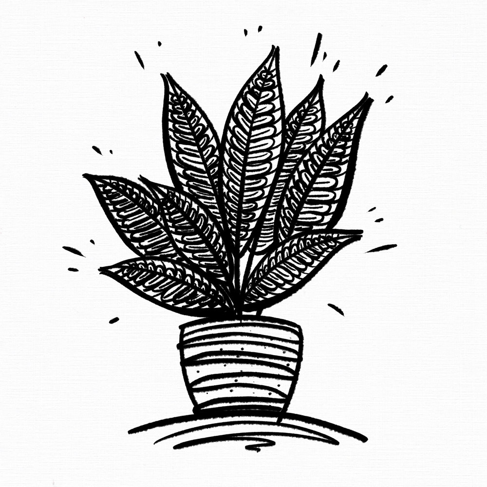 Potted Plants: 'Croton / 'Codiaeum variegatum pictum'
