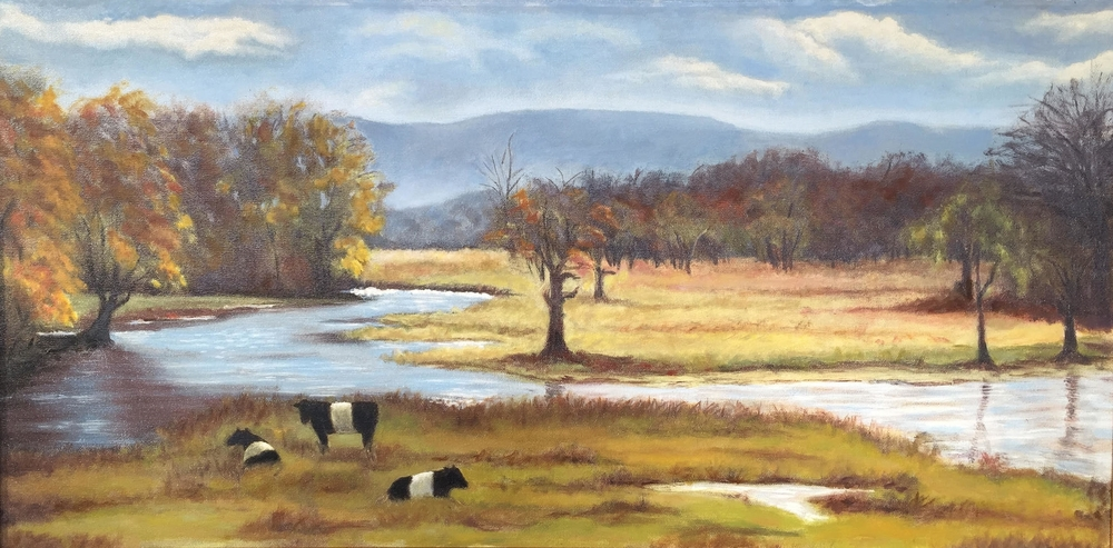 Belted Galloways • 15 x 30 • oil on canvas