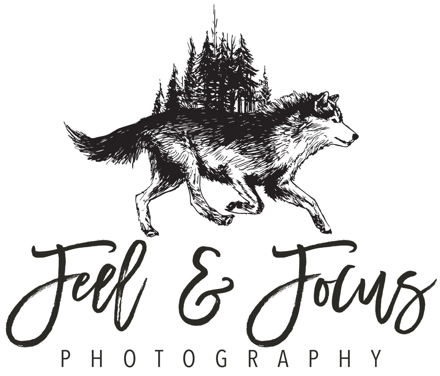 Feel & Focus Photography | Las Vegas Based Photographer