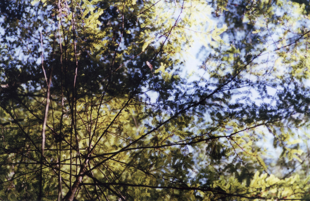 my forest spot edited.jpg