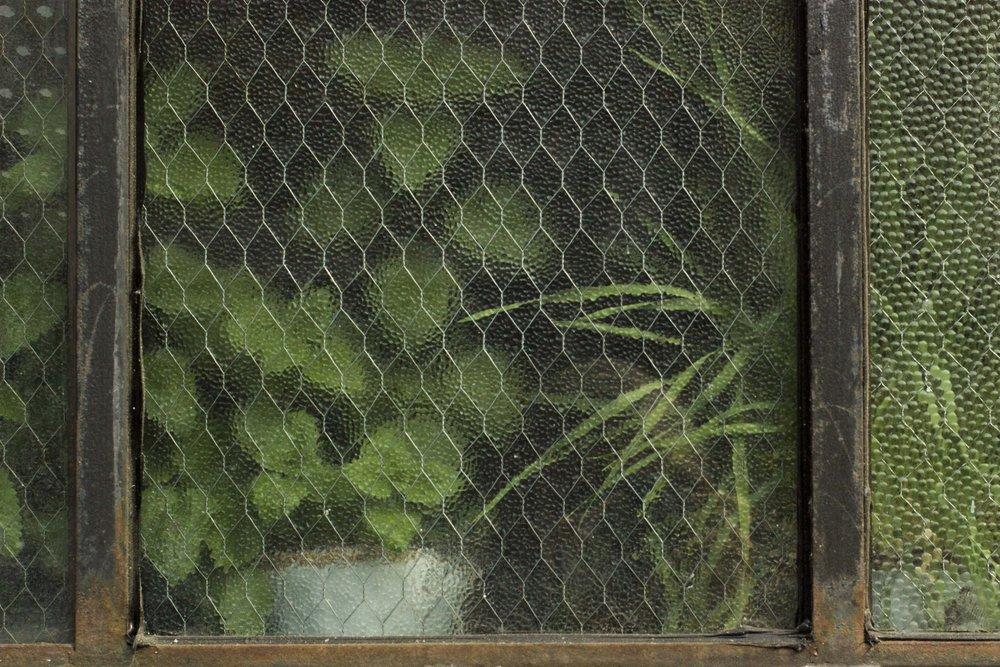 landscape leaves in window.jpg