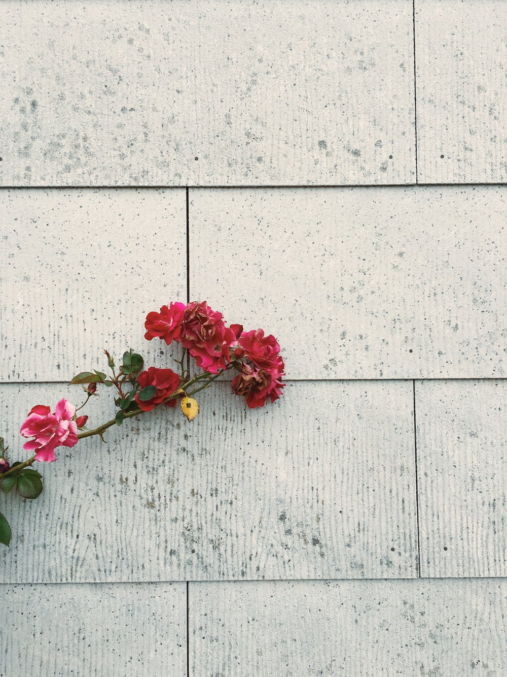 flower on wall fort bragg.JPG