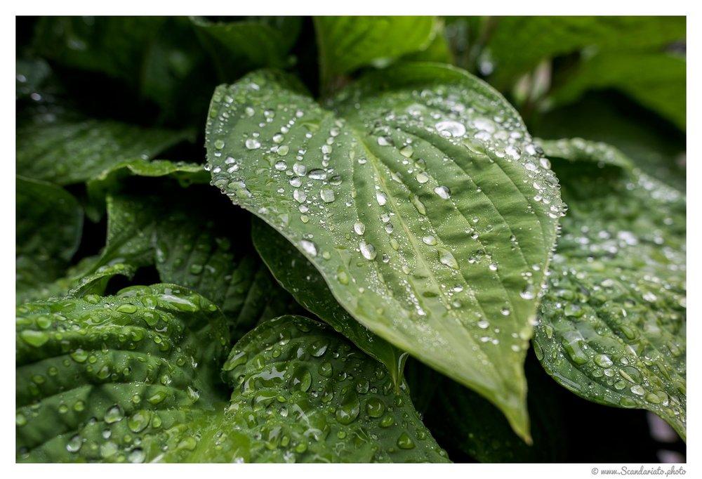 Leaves in the rain. 24mm on full-frame. 1/100 sec, f/4, ISO 140.