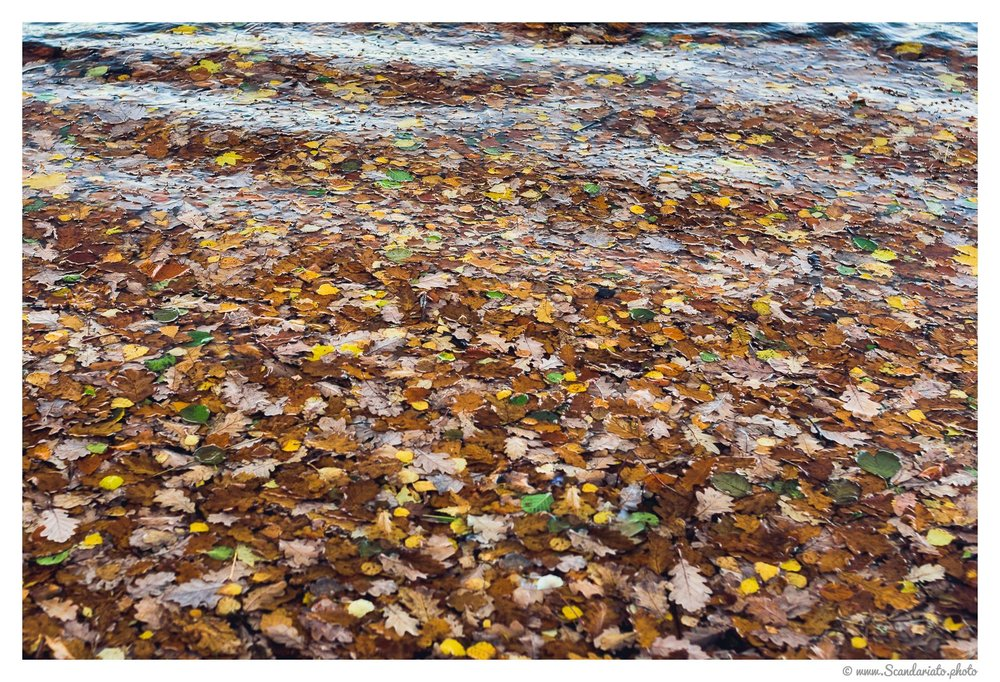 A sea of leaves, literally. 50mm on full frame. 1/125 sec, f/4, ISO 560