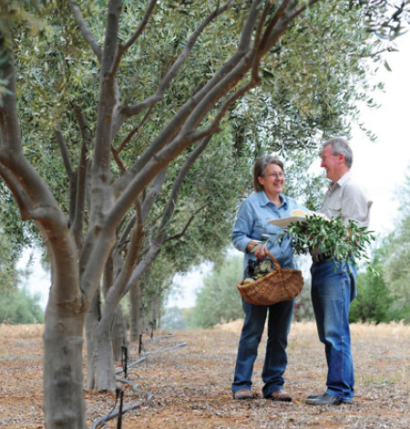 olieve-and-olie-in-the-gunbower-creek-olive-grove.jpg