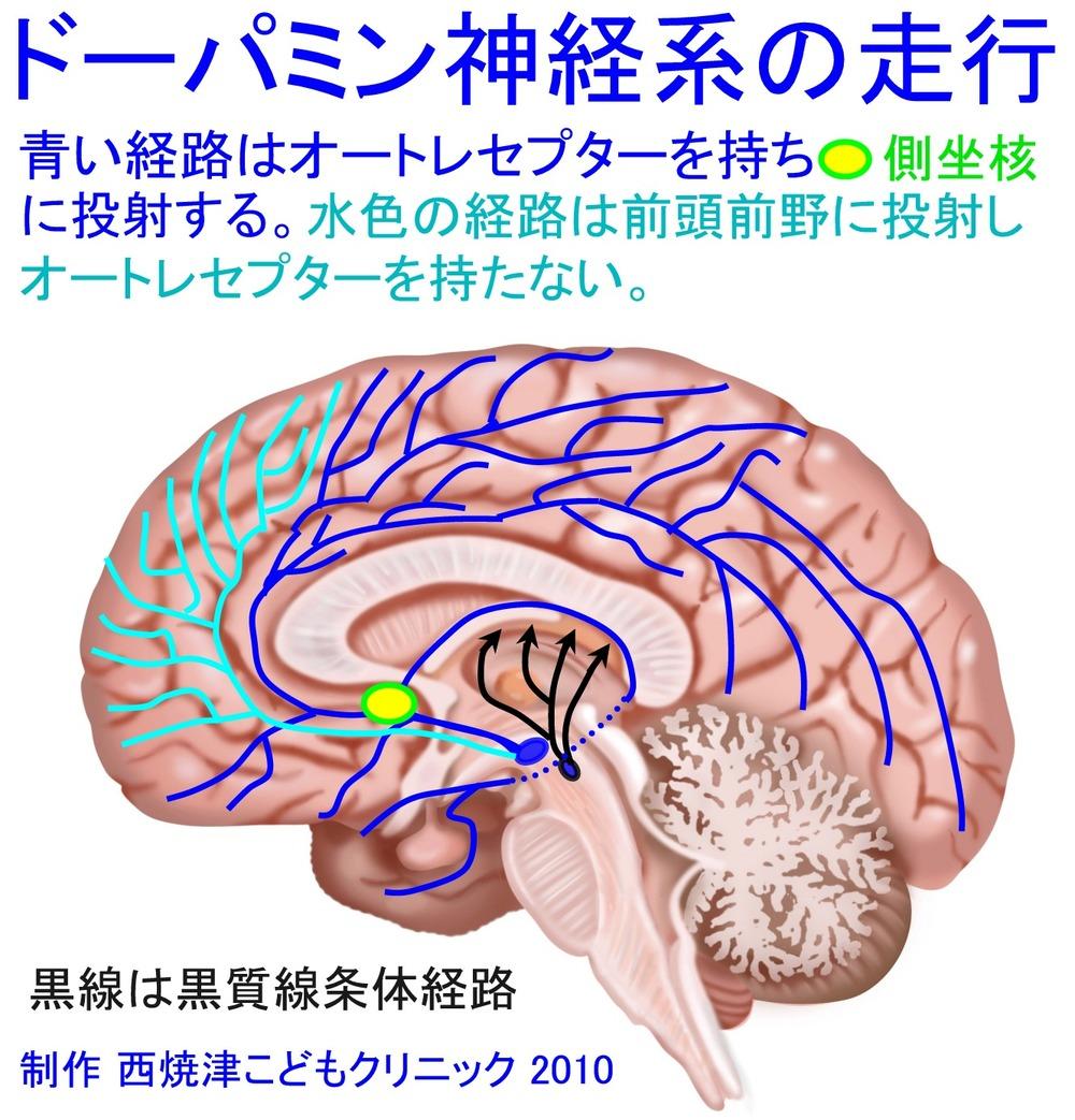 dopamin02.jpg