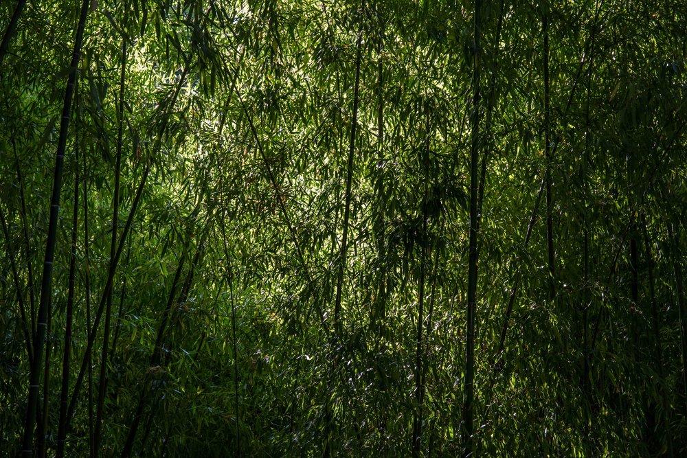 bambooatmonet