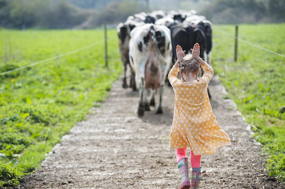 cow girl 2.jpg