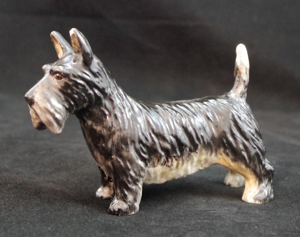Scottish Terrier F502