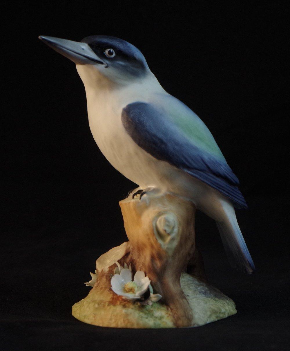 Australian Kingfisher F530