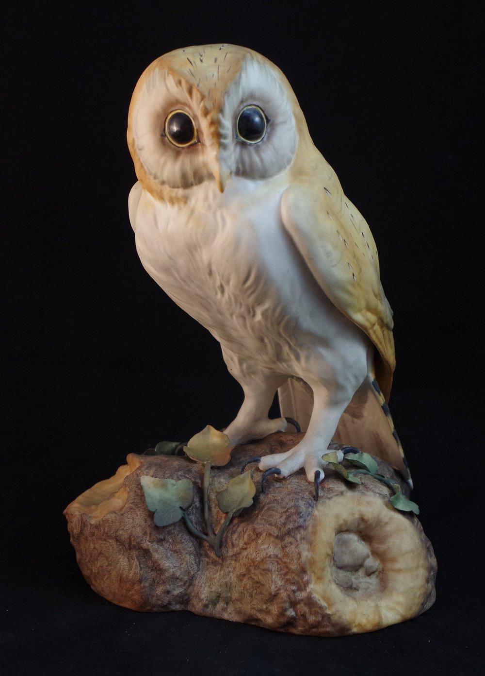 Barn Owl F525a