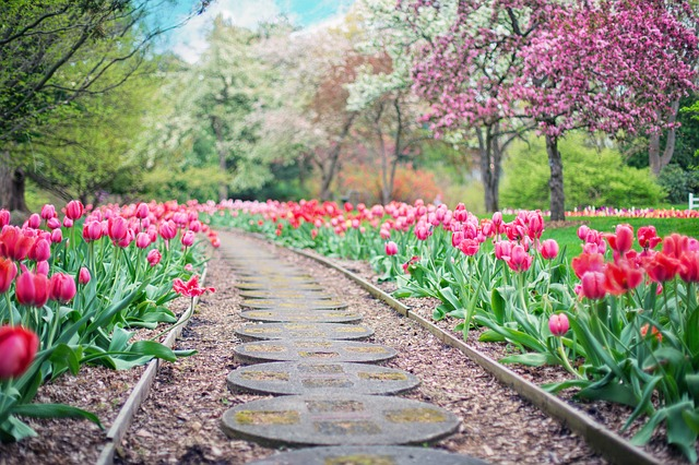 pathway-pink tulips.jpg