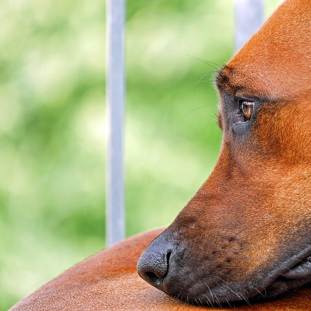 dog-sad.jpg