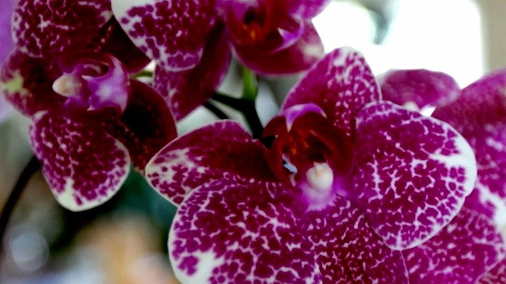 orchids-rt.jpg