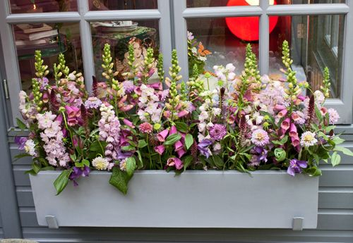 Nikki Tibbles window box on display at Chelsea Flower Show 2012 (photo courtesy of Pinterest)