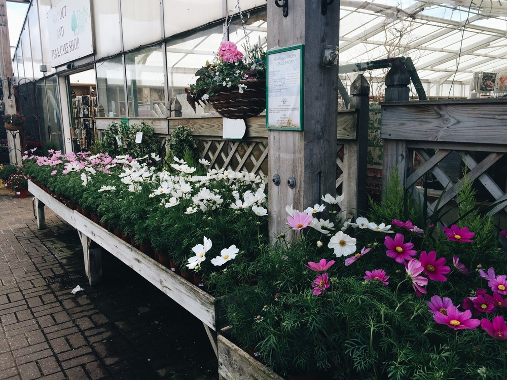 The range of colours of Cosmos available last week at Harlow Garden Centre.