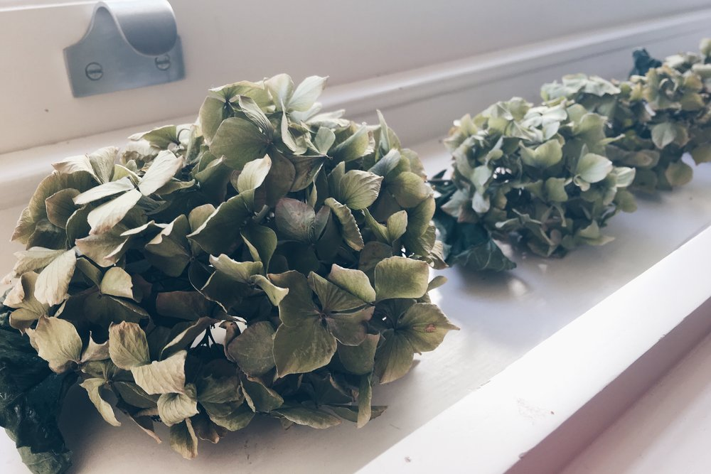 Leave cut hydrangea heads to dry out for a few days on a window sill.