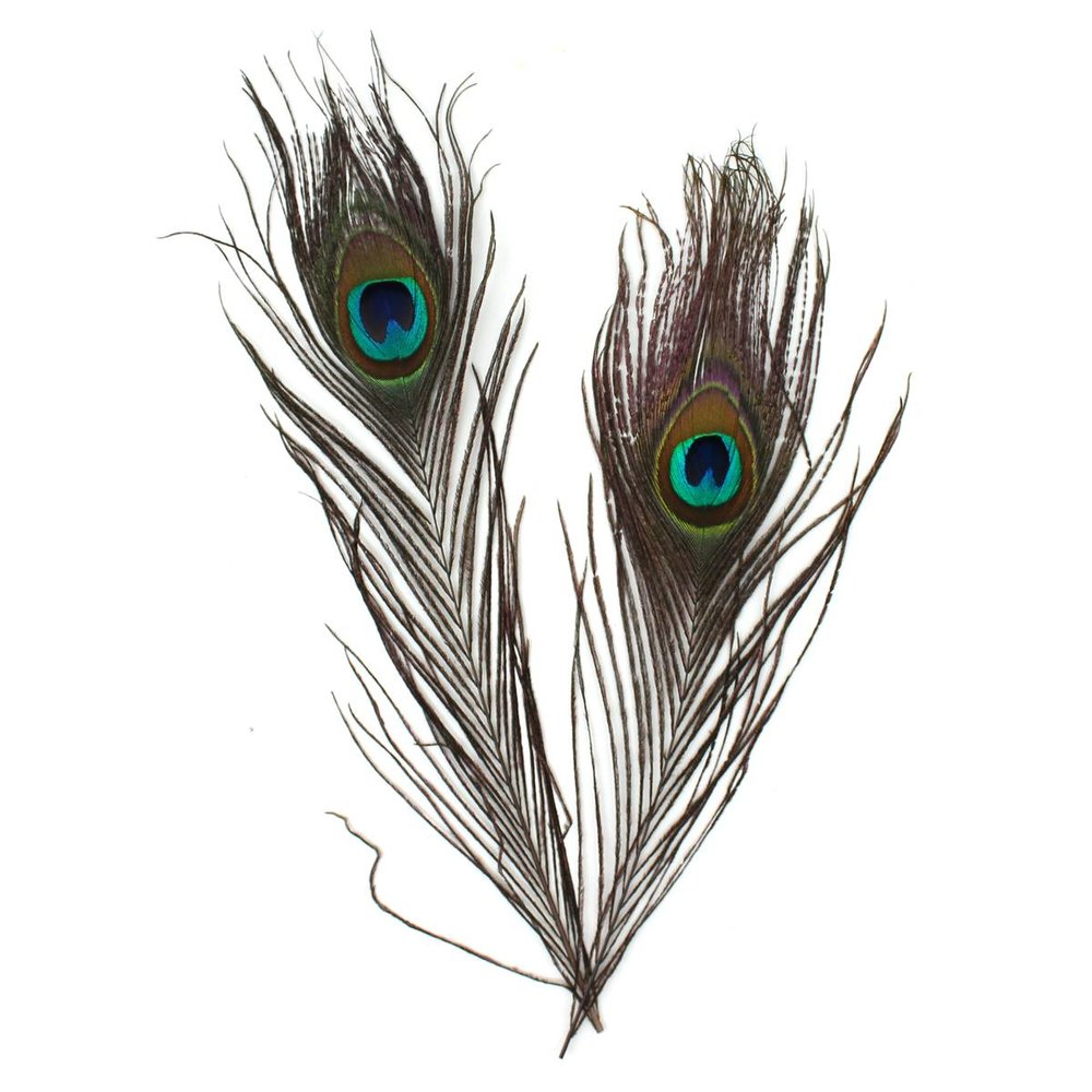 4 Pack Peacock Feathers £1.80