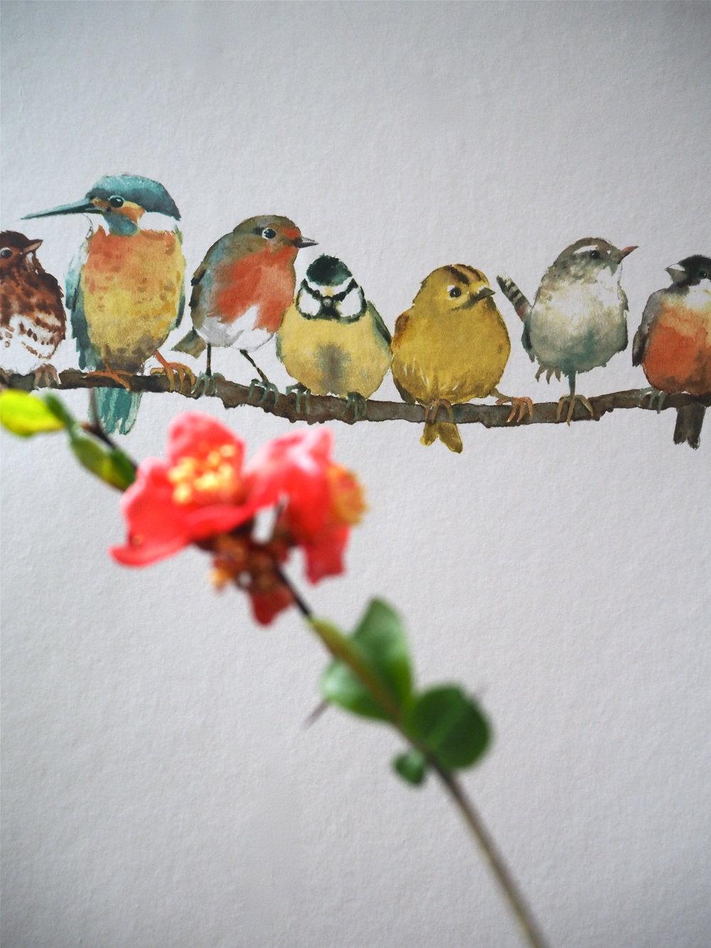 Garden Birds    Wallpaper by Laura Ashley