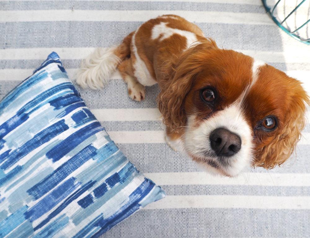 marks & spencer indoor outdoor rug