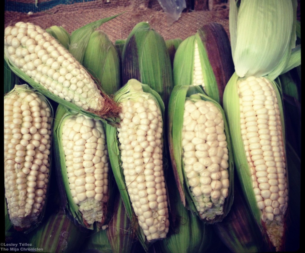 Elote cacahuazintle, a variety of corn that's often dried and used in pozole.