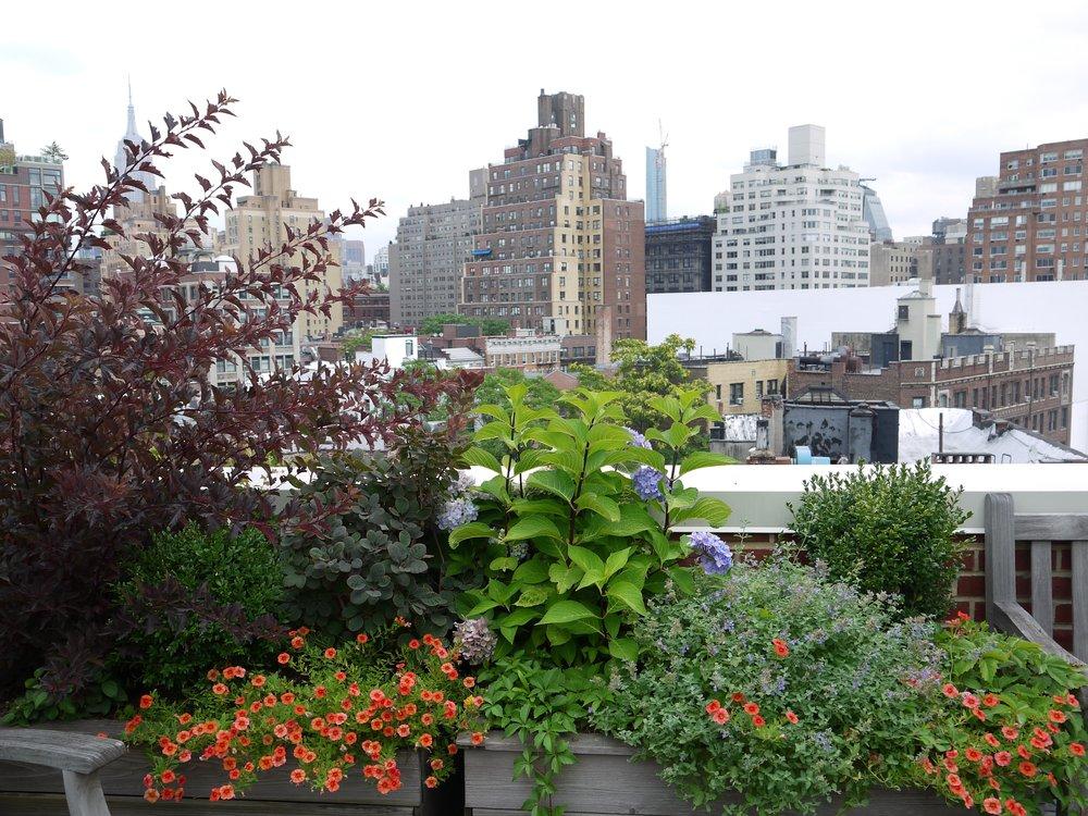 West_Rooftop_5.jpg