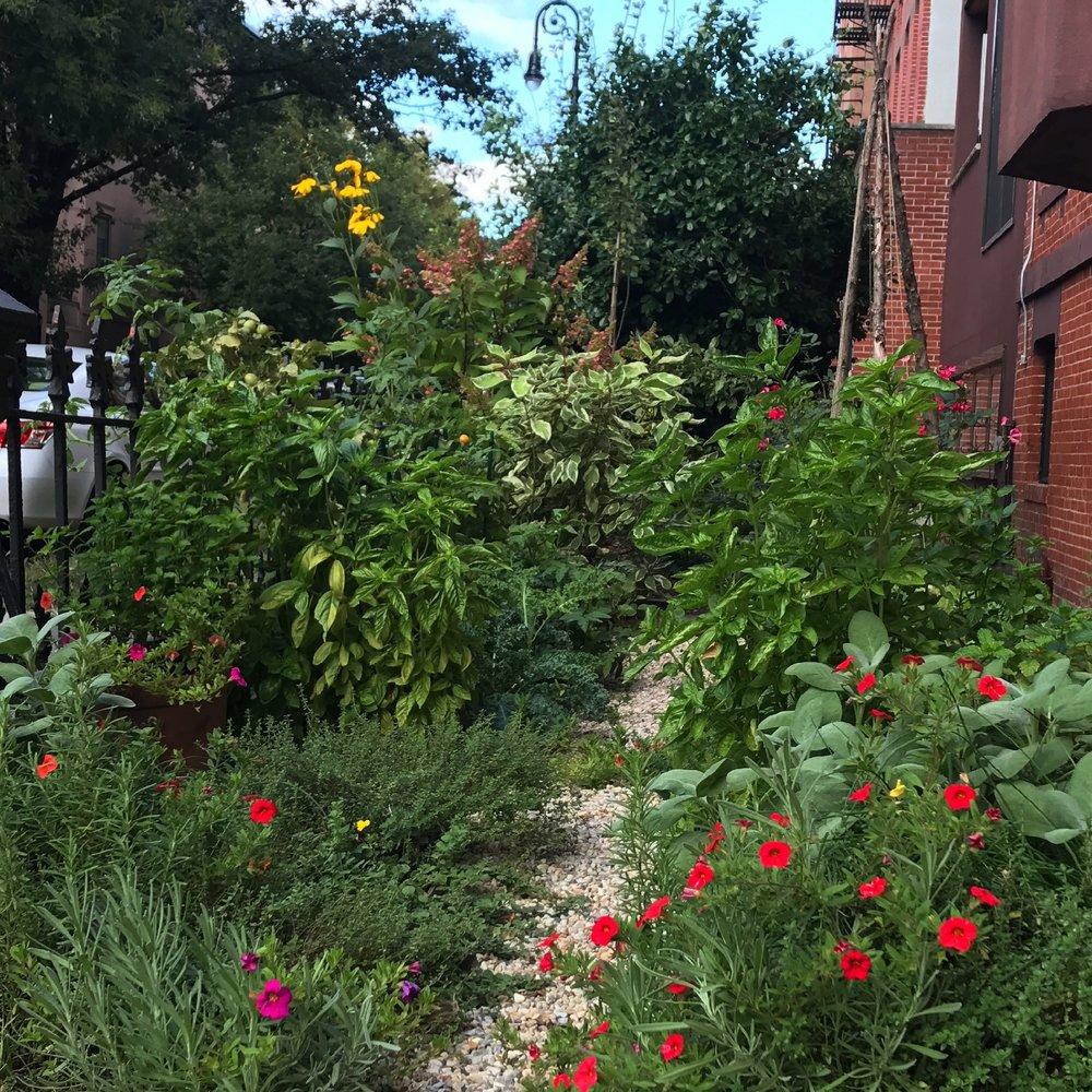 BK Veggie garden.jpg