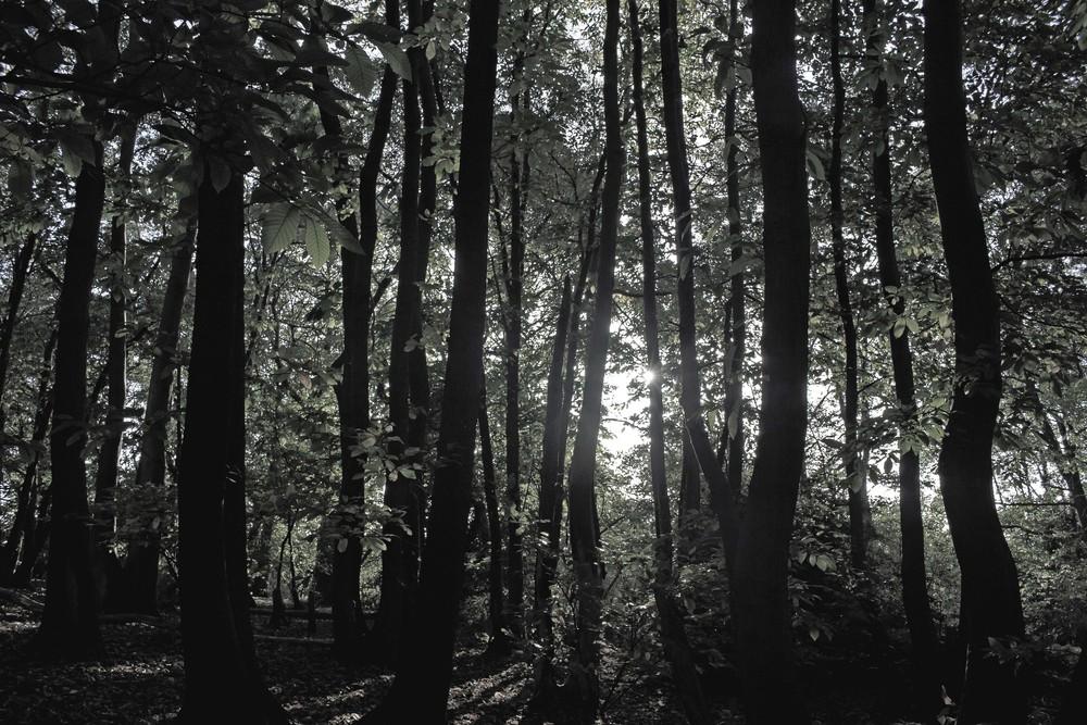 woodsbw2.jpg