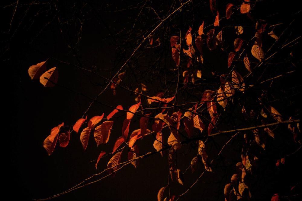 autumn17.jpg